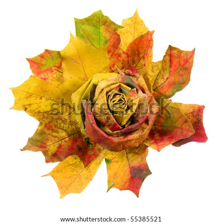bouquet of colorful autumn leaves isolated