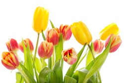 Bouquet of colorful tulips isolated on white background