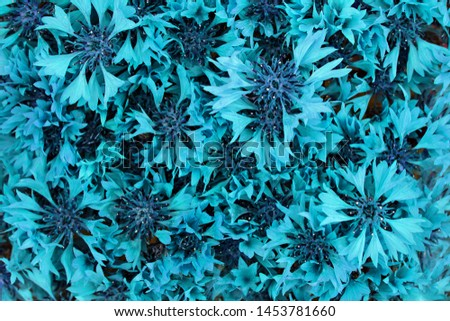bouquet of cornflowers. close-up  Fluorescent colors. Abstract background. Nature concept. #1453781660
