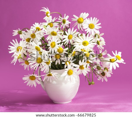 bouquet of daisies in a white vase