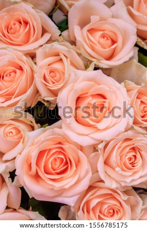 Bouquet of delicate roses . A background of floral roses. Beautiful flowers. A gift for the holiday. Fresh flowers. #1556785175