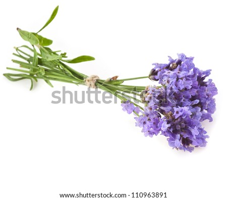 bouquet of flowering  lavender herb on a white background