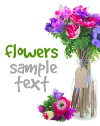 bouquet  of fresh  anemone flowers  in glass vase isolated on white background