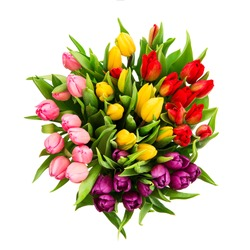 bouquet of fresh multicolor tulip flowers isolated on white background