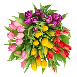 bouquet of fresh multicolor tulips isolated on white background. spring flowers. top view