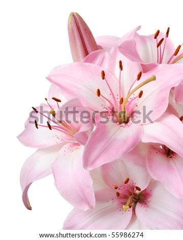 Bouquet of fresh pink lilies isolated on white #55986274