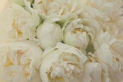 Bouquet of fresh white peony flowers bakcground, retro toned