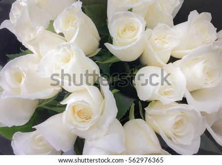 Bouquet of fresh white wedding roses, flower bright background. Sign of love.
