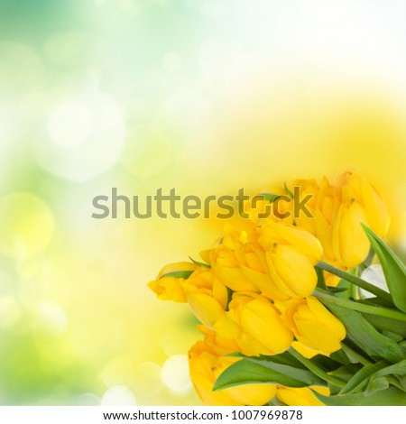 bouquet of fresh yellow tulips on green bokeh background #1007969878
