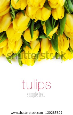 bouquet of  fresh yellow tulips on white background (with easy removable text)
