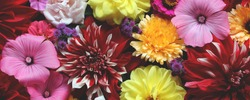 bouquet of garden flowers, top view. floral greeting card with dahlias and lavaters, natural background.