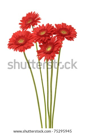 Bouquet of gerber flowers isolated