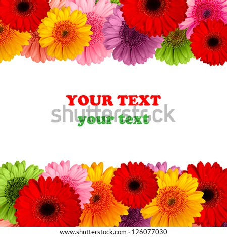 bouquet of gerbera flowers isolated on white background