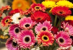 Bouquet of gerberas.Yellow and red gerberas.