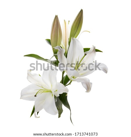 Bouquet of light lilies isolated on white background. Foto stock ©