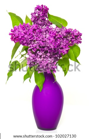 bouquet of lilac flowers in vase on white background