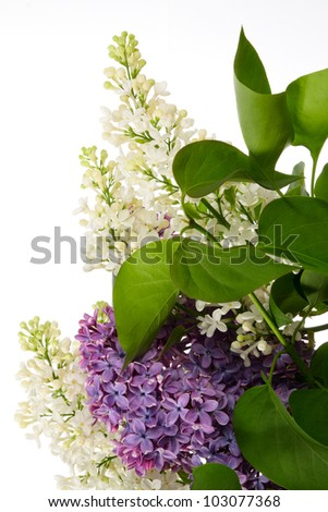 Bouquet of lilac isolated on white