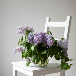 bouquet of lilac twigs in a transparent green jar on the white chair as a decoration of interior