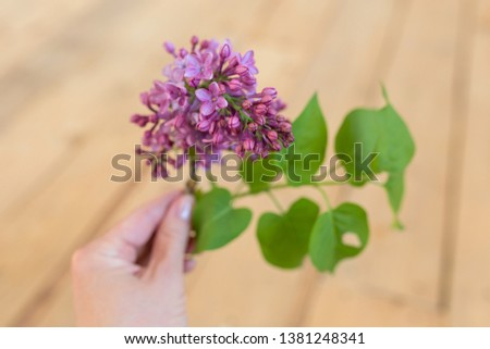 Bouquet of lilacs in hand. Spring lilac. Lilac flower