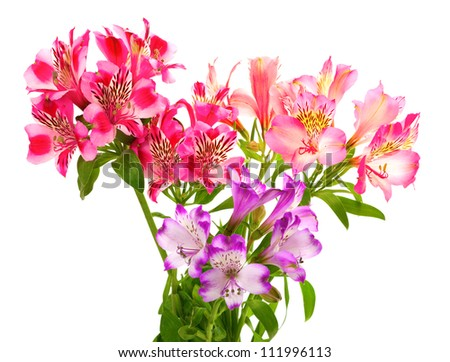 Bouquet of lilies (alstroemeria). Isolated on white background