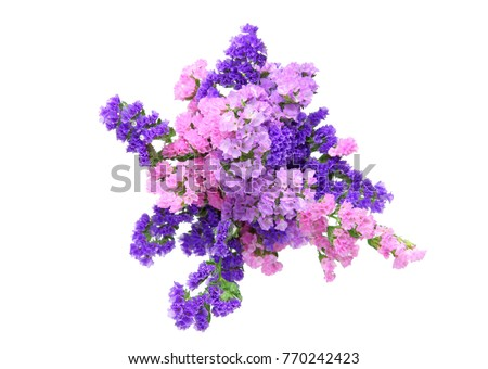 bouquet of Limonium in a white background #770242423