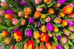 bouquet of multicolor tulips. fresh spring flowers