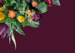 Bouquet of multicolor tulips isolated on matte maroon background with copy space, top view.