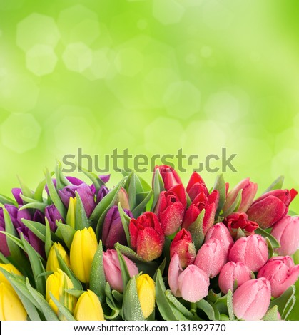 bouquet of multicolor tulips over blurred green background. fresh spring flowers with water drops