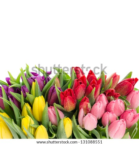 bouquet of multicolor tulips over white background. fresh spring flowers with water drops
