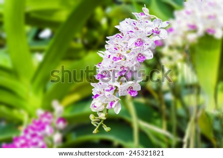 bouquet of orchid flower with soft focus and blur background