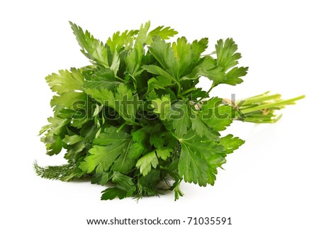 Bouquet of parsley isolated on white