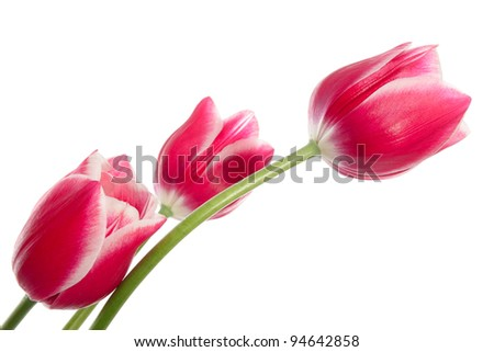 Bouquet of pink flowers isolated on white