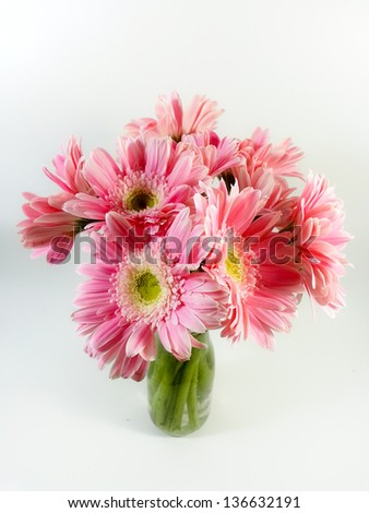 bouquet of pink gerbera daisies isolated on white background