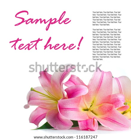 bouquet of pink lilies with water drops isolated on white background, ready template - stock photo