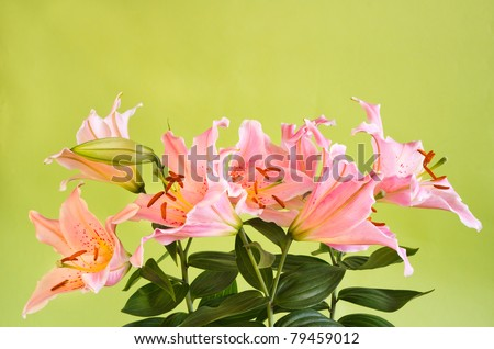 bouquet of pink lily flowers on green background