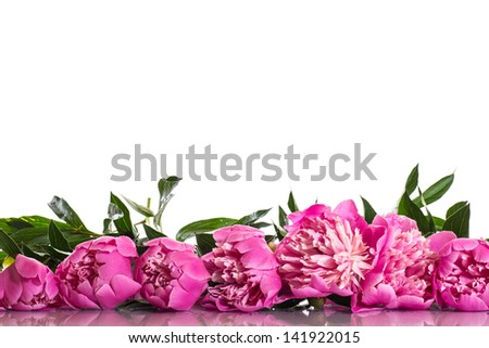 bouquet of pink peonies  on a white background