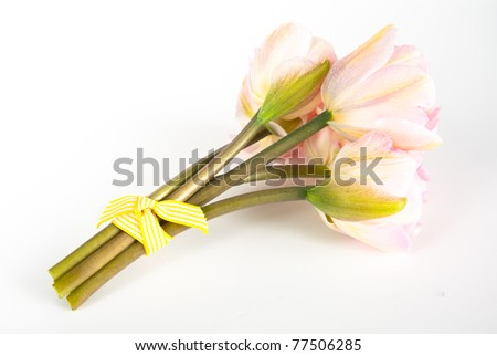 Bouquet of Pink Tulips on White