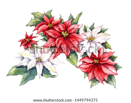 Bouquet of poinsettias painted with watercolors