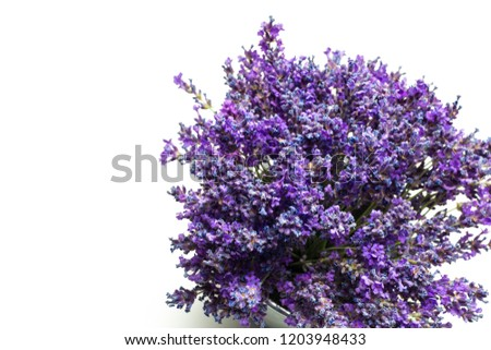 bouquet of purple lavender flowers on a white background. #1203948433
