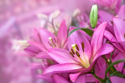 Bouquet of purple lilies. Floral pattern.