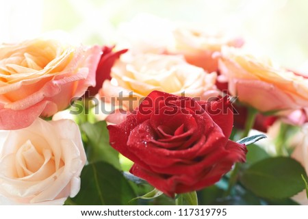 Bouquet of red and white beautiful roses with water drops isolated on white.