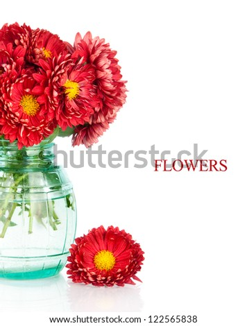 Bouquet of red autumn chrysanthemum flowers in vase, isolated on white
