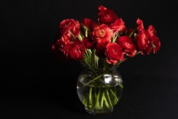 Bouquet of red flowers  ranunculus in a clear glass vase  on a black background.