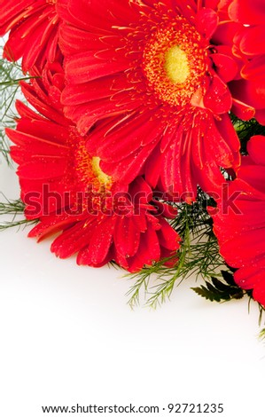 Bouquet of Red Gerbera Daisy Flower on White Background