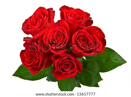 bouquet of red roses on white