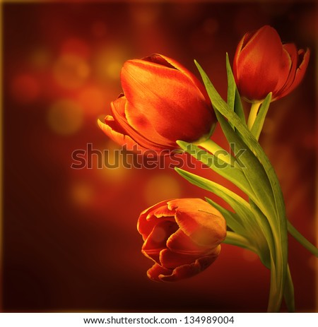 Bouquet of red tulips against a dark background #134989004