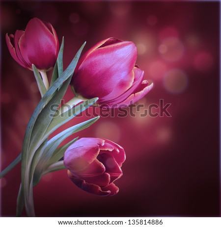 Bouquet of red tulips against a dark background #135814886