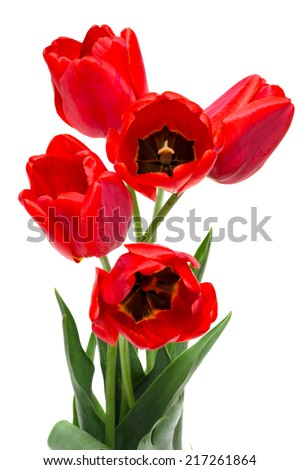 bouquet of red tulips isolated on white #217261864