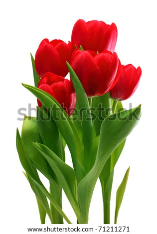 bouquet of red tulips isolated on white