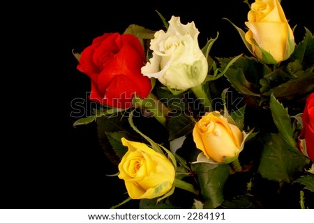 Bouquet of roses (clipping-path included)